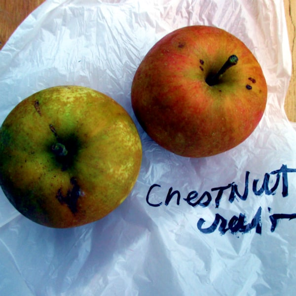 Chestnut Crab Apples