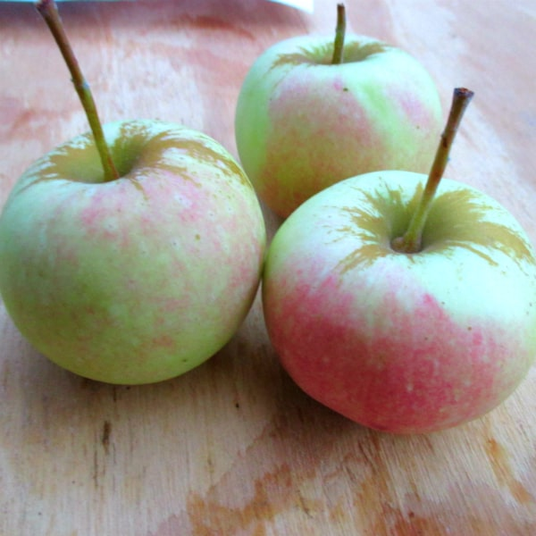 Pink Sugar Apples