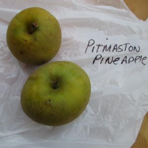 Pitmaston Pine Apple