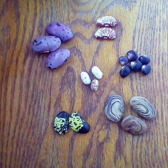 Simcox Beans