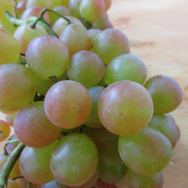 When are Muscat Grapes in Season