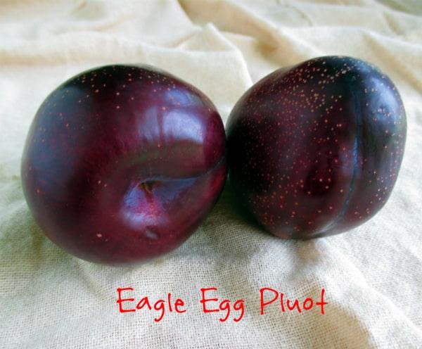 Eagle Egg Pluot