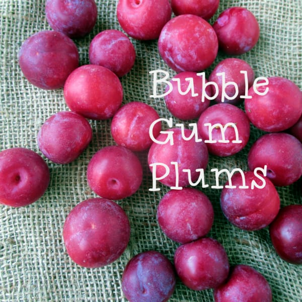 Bubble Gum Plums