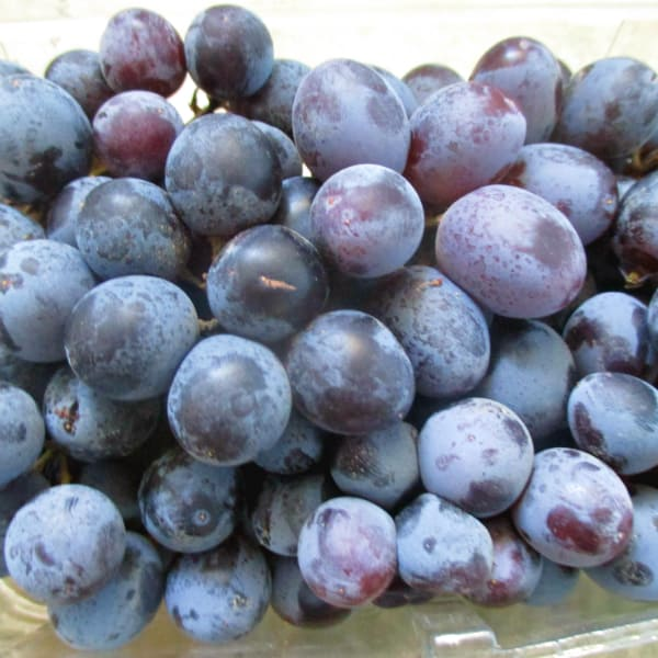 Sable Seedless Grapes