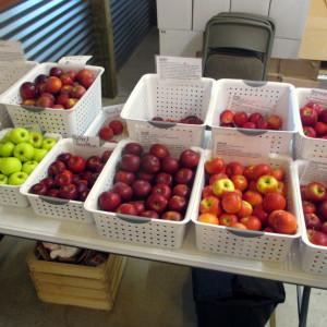 My Visit to Eastman's Antique Apples – Wheeler, MI