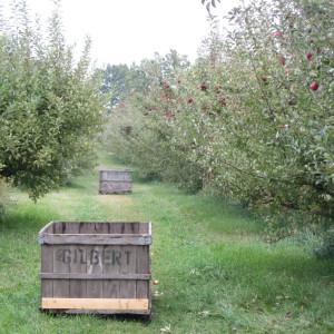 My Visit to Brookwood Fruit Farm – Almont, MI