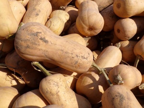 How do butternut squash taste different than acorn squash