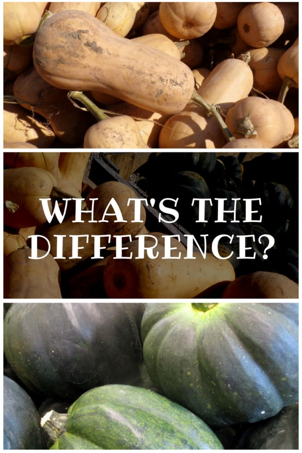 What is the taste difference between butternut and acorn squash
