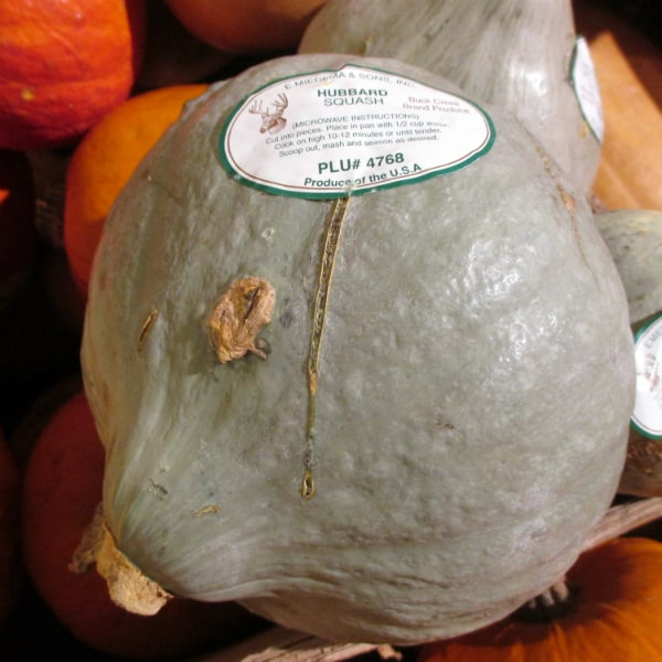 Hubbard Squash for Replacement Pumpkin Pie