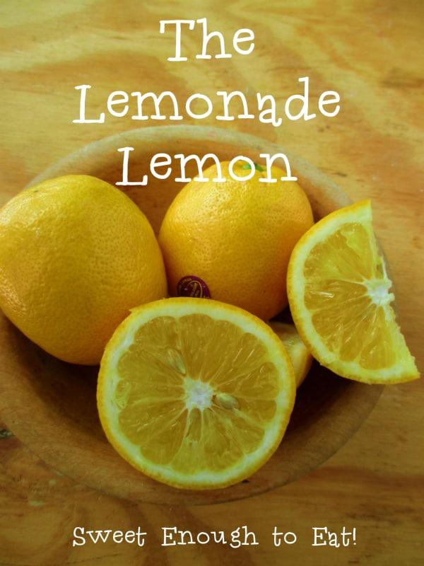 Lemonade Lemon Fruit