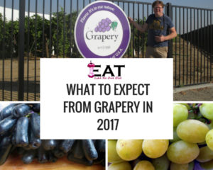 What to Expect from Grapery in 2017