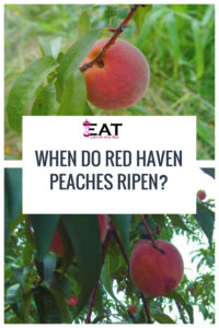 When Do Red Haven Peaches Ripen In Each State