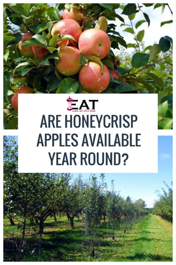 Are Honeycrisp Available Year Round? When are Honeycrisp Apples in Season?