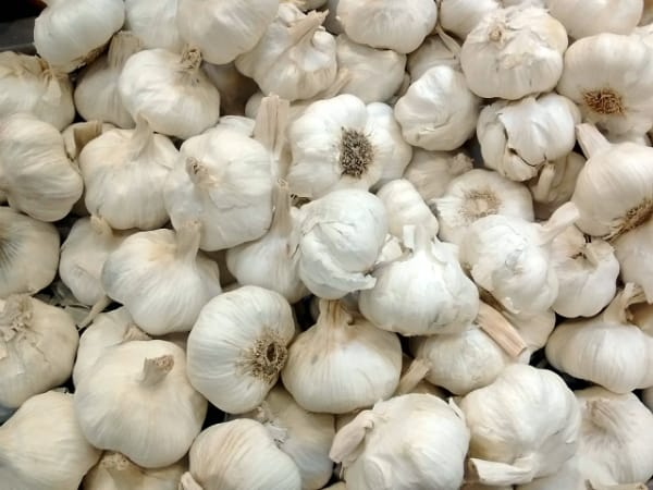 Pile of garlic bulbs