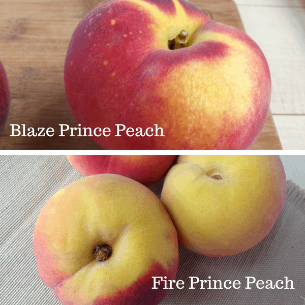 Blaze versus Fire Prince Peaches