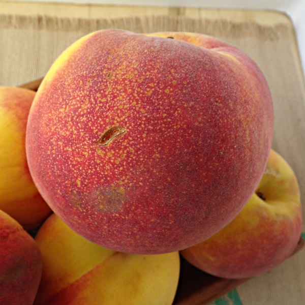 A peach with red blush and sugar spots on it is on top of a bunch of other peaches.