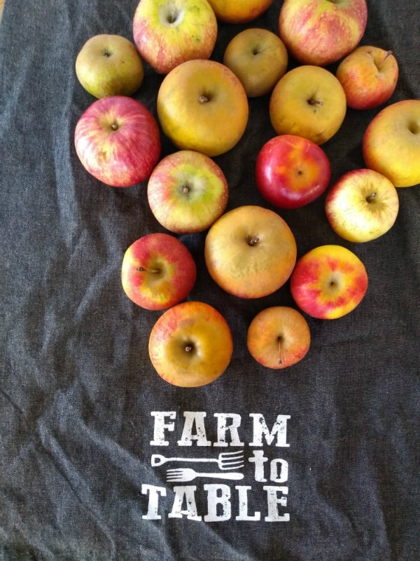 """Apples on top of a black towel that says 'Farm to Table"""""""