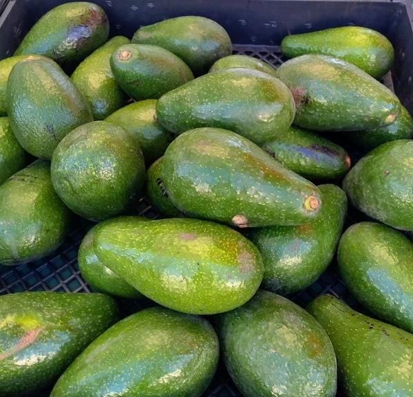 Bacon avocado from California