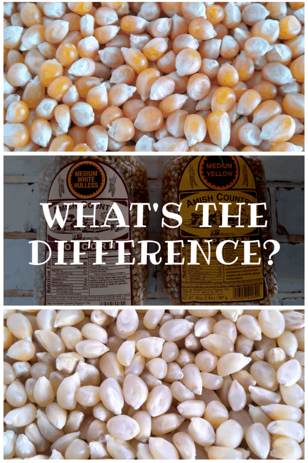 What's the Difference Between Yellow and White Popcorn?