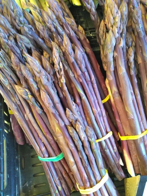 Purple asparagus bundles that has been bundled with a rubber band
