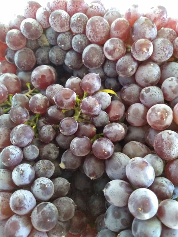 Champagne Grapes with natural bloom