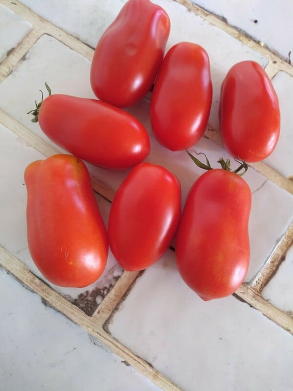 Garden Grown San Marzano Tomatoes