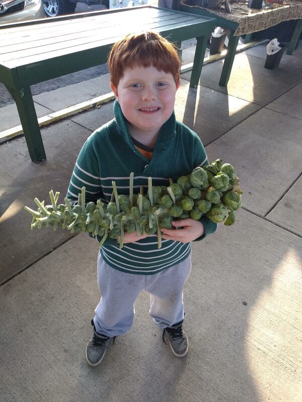 My son carrying Brussels Sprouts stalk