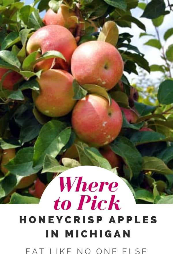 Where to Pick Honeycrisp Apples in Michigan Near Me