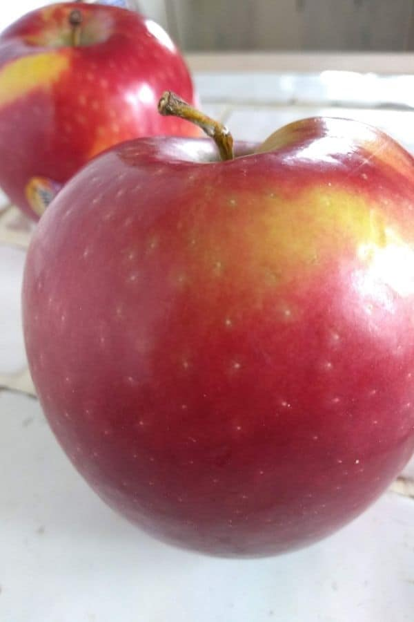 Cosmic Crisp apples up close
