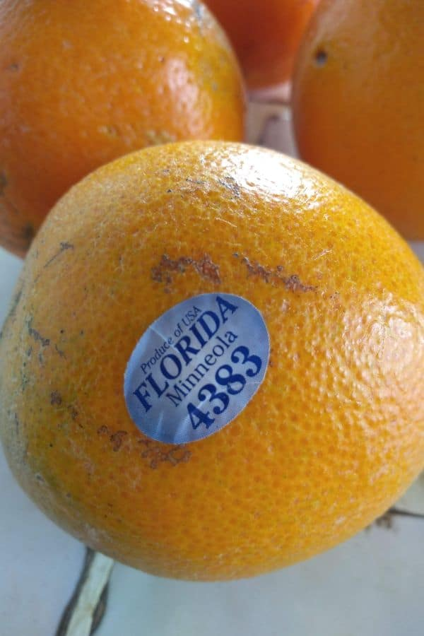 Florida Minneola or Honeybell