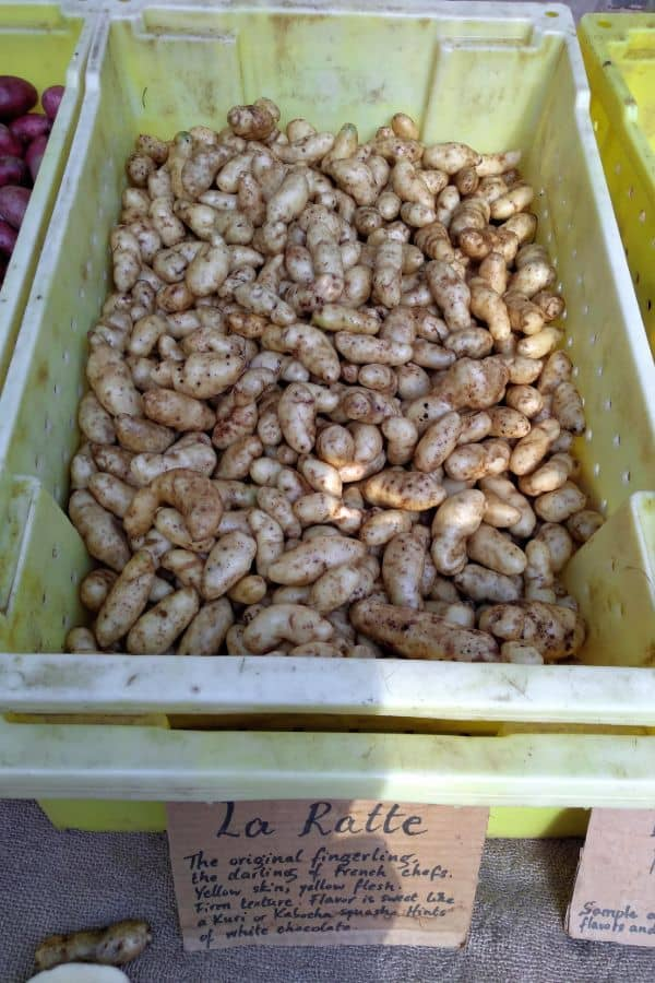 La Ratte Potatoes in a yellow bin at the farmer's market