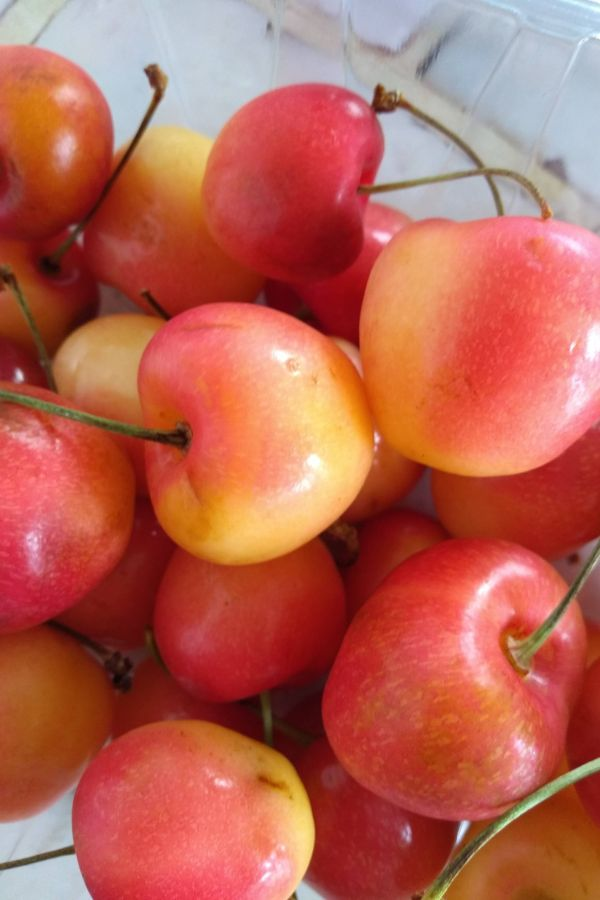 Close up picture of Orondo ruby cherries