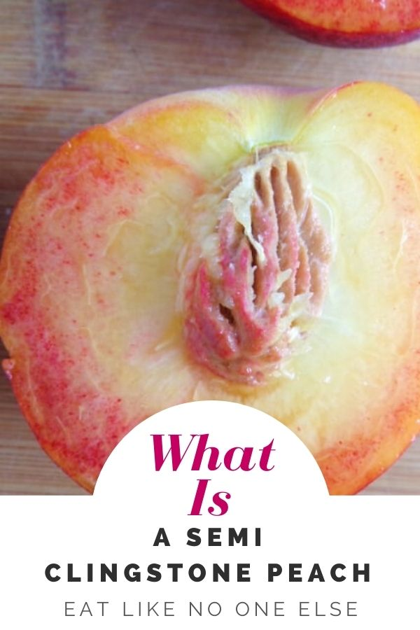 """Close up of a peach with a pit stuck in the middle and the words """"What i a Semi Cling stone peach"""" underneath."""
