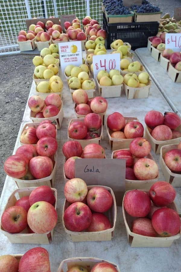 A farmer's market table with Gala apples in front and Ginger Gold apples behind.