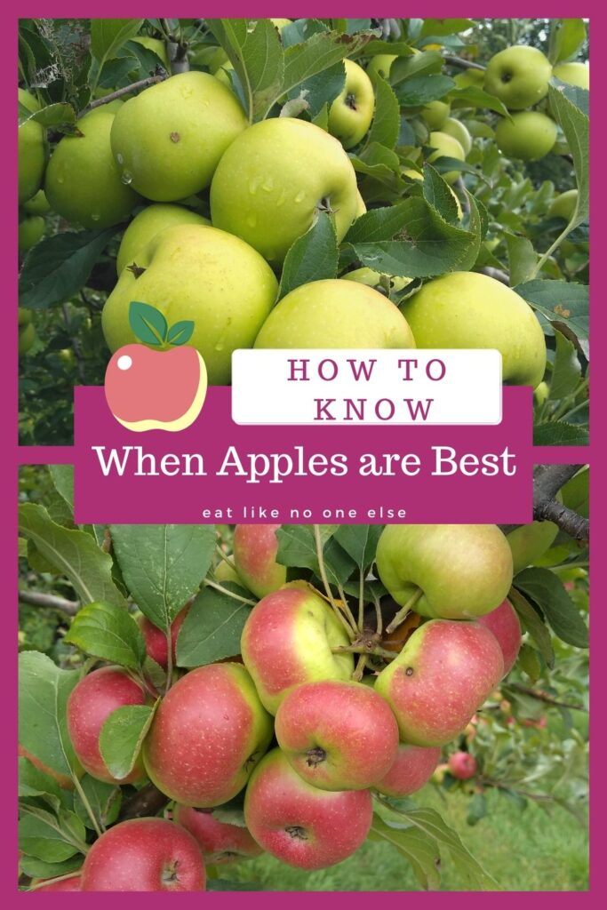 "A collage of apples hanging in the trees with the words ""How to Know When Apples are Best""."
