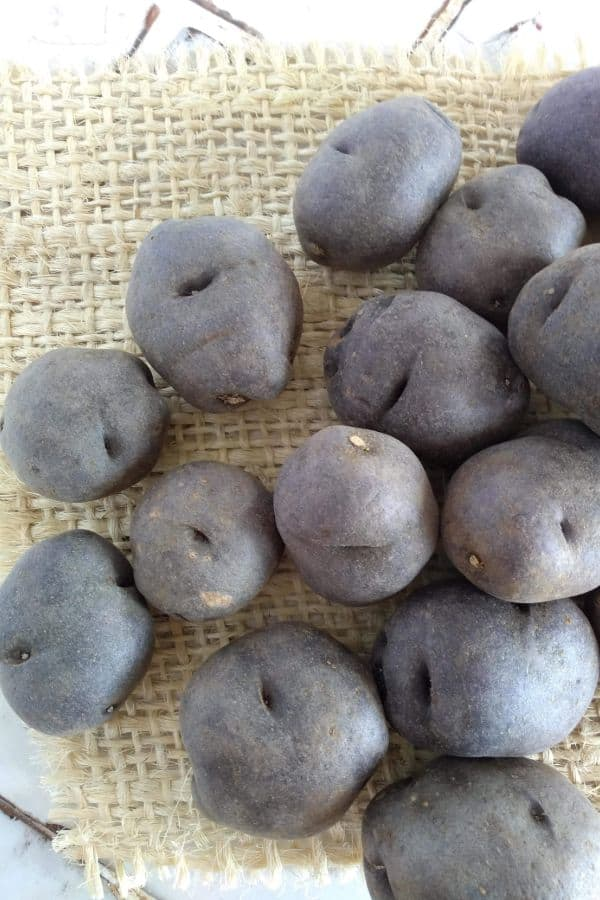 Purple potatoes piled up on a piece of burlap sitting on a counter.