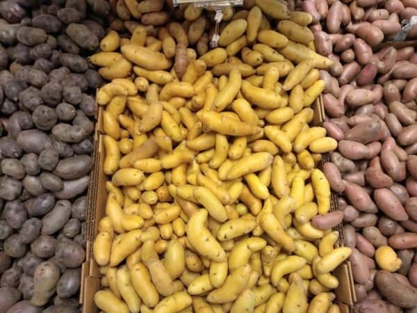 A display of fingerling potatoes in purple, yellow, and red in 3 different boxes.