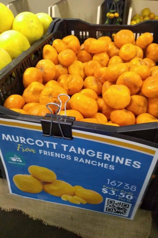 A bin full of Murcott mandarins from Friends Ranches.