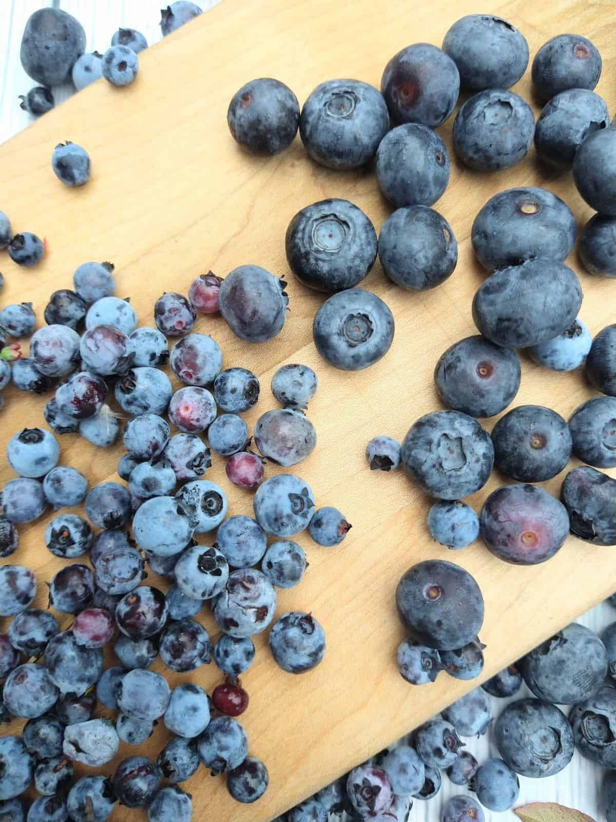 A wood cutting board with regular blueberries next to wild blueberries. You can clearly see how much smaller the wild blueberries are.