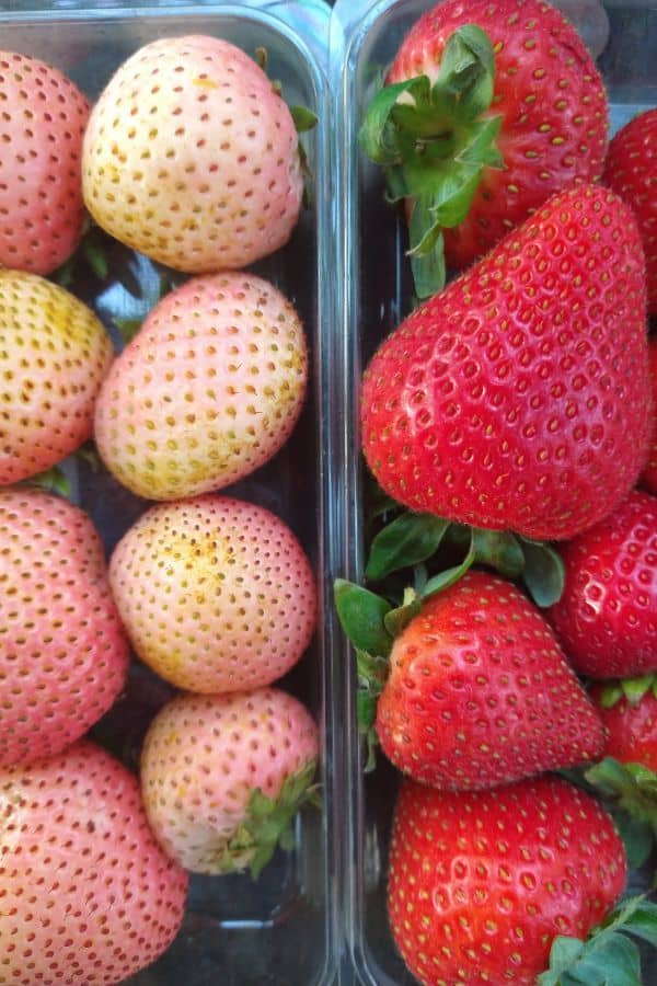 Rosé strawberries next to traditional red colored strawberries to show the striking difference in color.