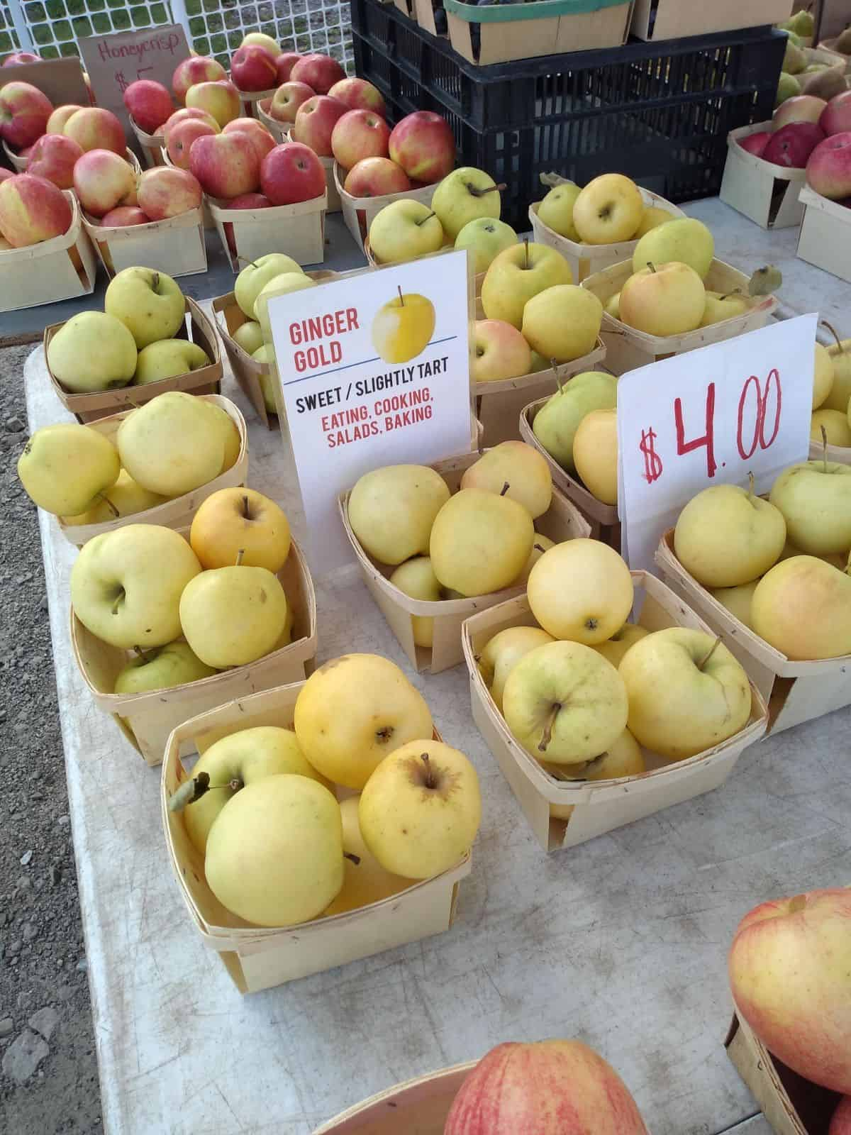 Wood containers filled with Ginger Gold apples on a table at a Farmer's Market. A sign says the apples are $4 per container. Another sign says that Ginger Gold apples are sweet/slightly tart. Good for eating, cooking, salads, and baking.