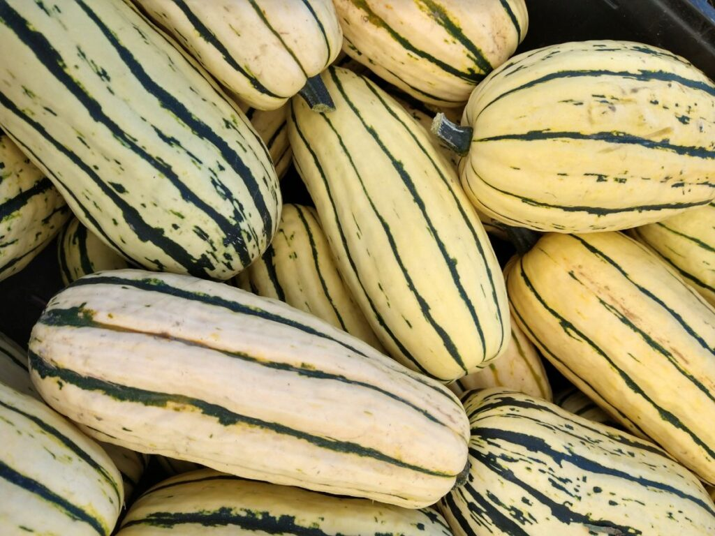 A pile of green striped Delicata squash zoomed in on inside of a bin.