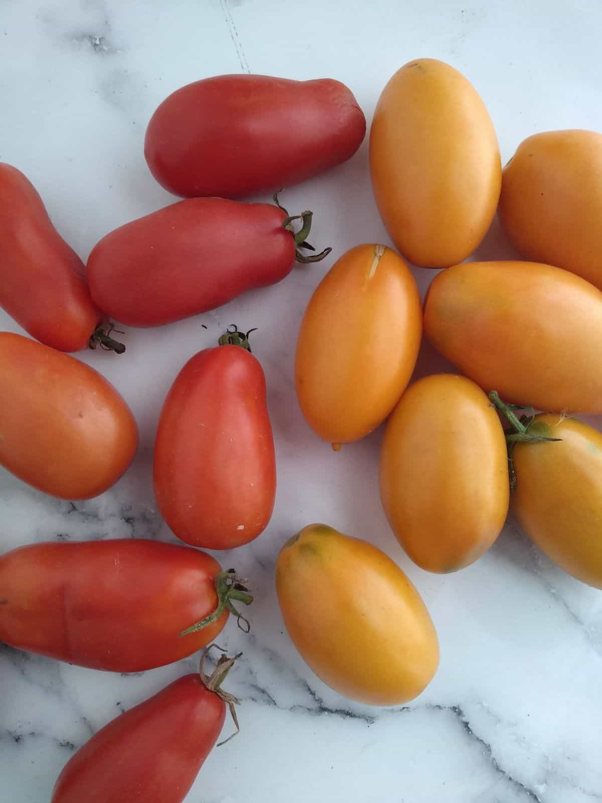 Red and orange Roma style paste tomatoes on a white with black surface.